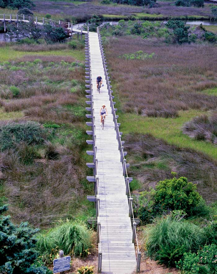 Bike-Path-Swamp